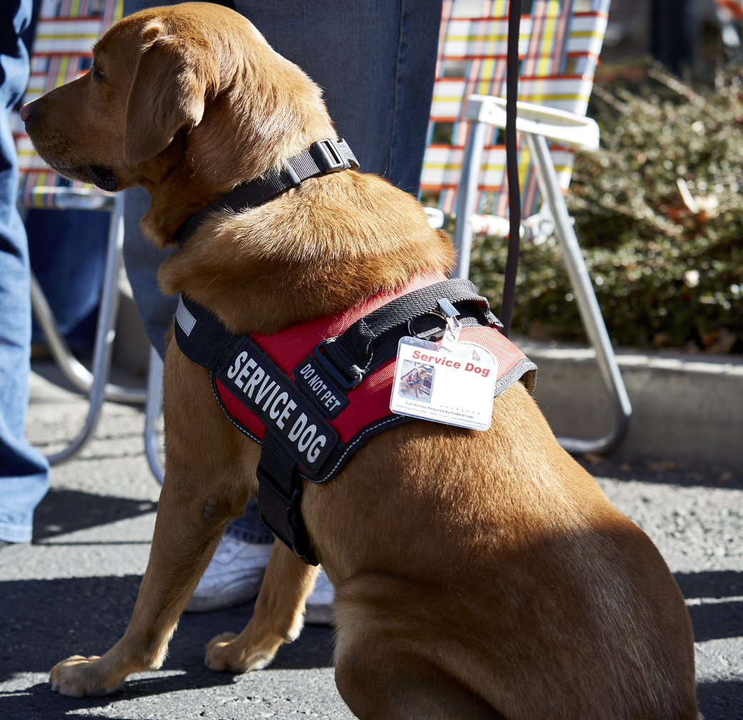 New York Passes Law Against Service Animal Fraud Joining Other
